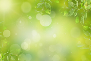 Spring or summer green background with sunlight and leaves