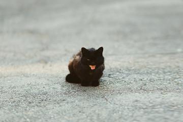 black shiny cat walking outdoors in summer