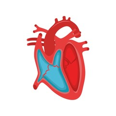 Human Heart Anatomy. Part of the human heart. Anatomy. Diastole and systole.Filling and pumping of Human Heart structure anatomy anatomical diagram
