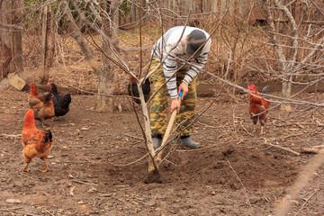a farmer planting walnut tree and next to him go chickens