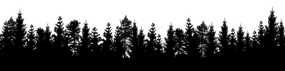 Seamless forest vector landscape with coniferous trees in black and white.