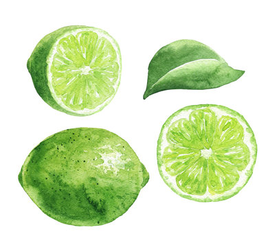 Hand drawn watercolor lime fruits isolated on white background. Green citrus with leaf and cut half. Food illustration.