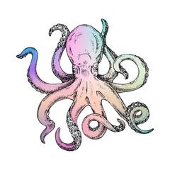 Rainbow Octopus Vector Illustration. Gigantic octopus vector ink sketch.