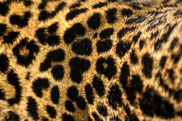 Tiger skin.
