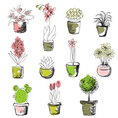 vector set of house flowers in a pot.
