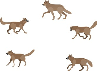 Wolves isolated in white vector set, animals, mammals