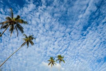 Palm trees under blue sky
