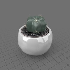 Cactus in a round planter