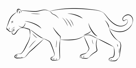 illustration of panther , vector draw
