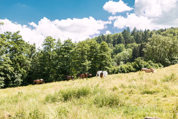 Horses on the green meadow