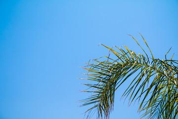 Green palm tree on blue sky backgroundgrunge palm background