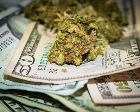 US Currency $50 bills & Marijuana Buds