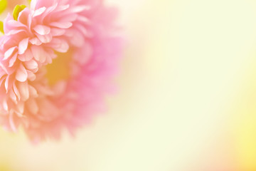 A beautiful pink flower on a yellow pastel blurred background.