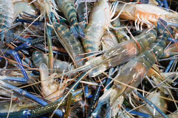 Giant freshwater prawn in seafood market