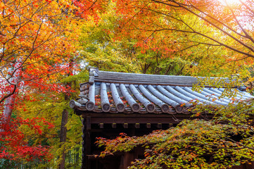 Wall Mural - colourful autumn leaf and temple roof in Kyoto, Japan.
