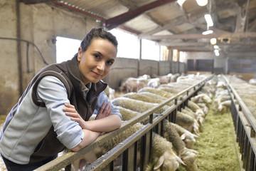Breeder in barn looking at sheep herd