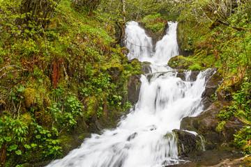 Bosque y cascadas, Arroyo de Braña Ronda. Reserva de la Biosfera del Valle de Laciana, León, España.