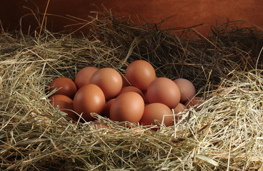 Chicken eggs in the hay