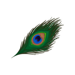 Beautiful emerald-green feather of peacock. Plumage of wild bird. Detaiked flat vector element for print, promo poster or flyer