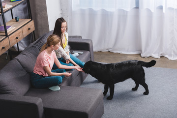 high angle view of two young female friends with black retriever at home