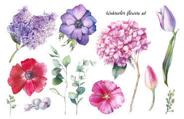 Hand painted floral elements set. Watercolor botanical illustration of tulip, hydrangea, anemones, lilac flowers and eucalyptus leaves. Natural objects isolated on white background