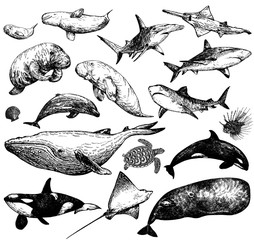 Set of hand drawn sketch style marine animals isolated on white background. Vector illustration.