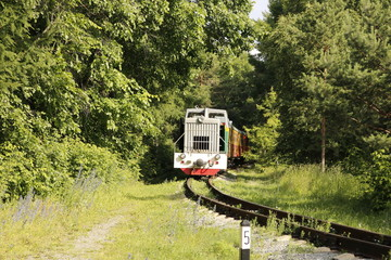 Train leaving the forest.