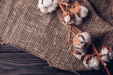 Beautiful cotton on burlap on a wooden table