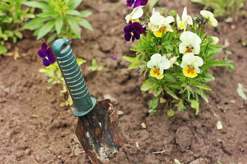 A tool for gardening and flowers.