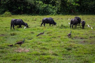 Birds and bulls