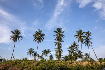 Coconut palms on blue sky