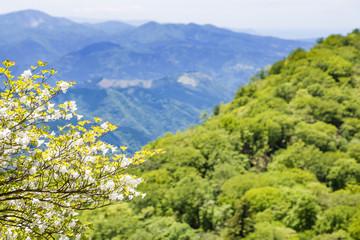 新緑の山に咲く花