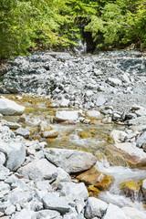 新緑と小川