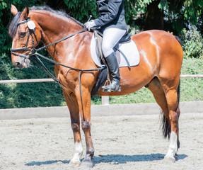 Pferdesport auf einem Dressurplatz