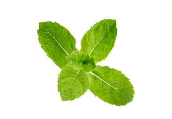 Mint garden, cooking herb Isolated against a white background.