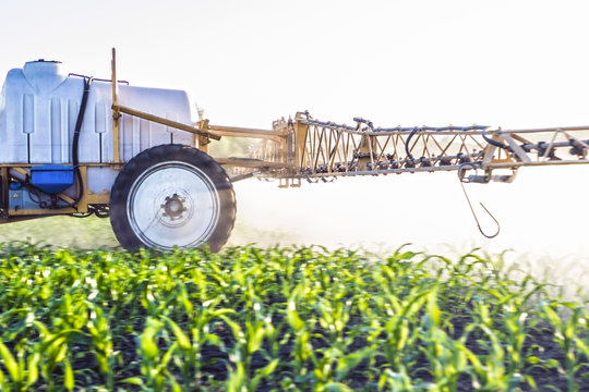 fog from micro fertilizers sprayed with a trailed sprayer on the field of maize