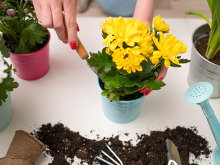 Image of soil, watering can, flowerpot, human hands with scoop