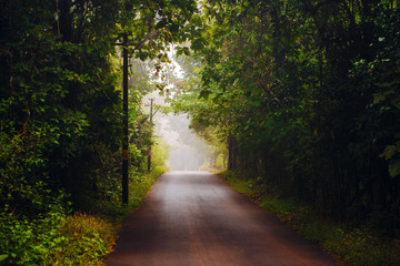 Morning foggy road with trees forming tunnel