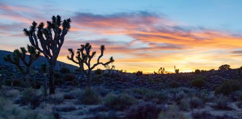 Panoramic desert landscape sunset in Joshua Tree National Park, California