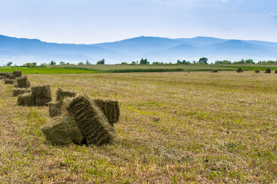 Alfalfa hay bale on fresh cutted agricultural field, blue mountains on the background.