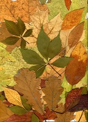 4682101 Autumn leaves of different trees and shrubs. Oak, maple, birch, aspen leaves. Fall background. Close-up photo