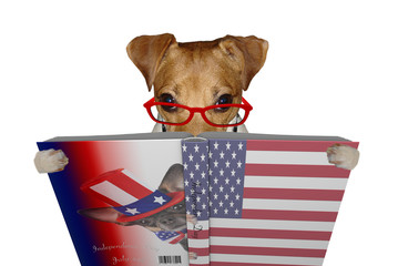 Cute jack russel dog read a book for Independence Day