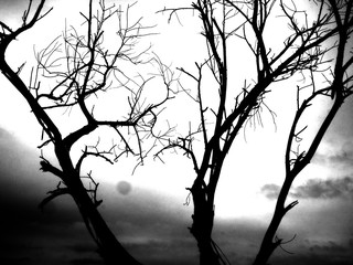 Black and white photos, trees and branches