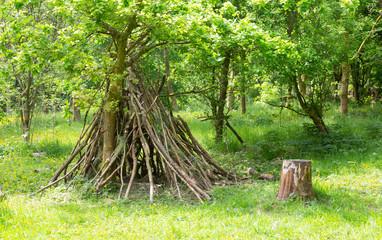 Den buidling indeciduous woodland