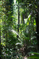 The rainforest of the Amazon