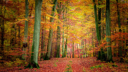 Golden and brown in the forest in autumn, Poland