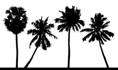 Wall Mural - Vector set of detailed tropical palm trees silhouettes.