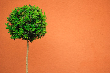 Green tree on an orange background.