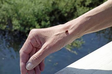 marienkäfer auf einer hand
