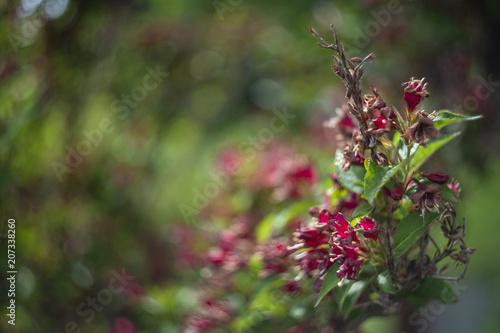 Flower by helios lens